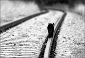 vias_de_tren